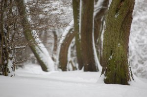 Winter_2010-045