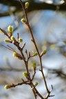 Frühling_2013-027