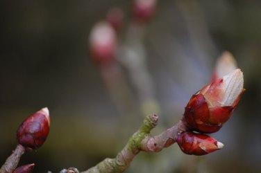 Frühling_04-022