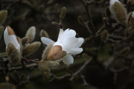 Frühling_04-024