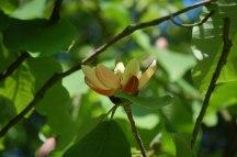 Blüten-011