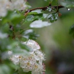 Blüten-012