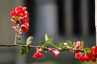 Blüten-017