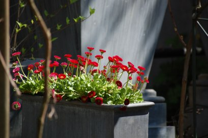 Blüten-018