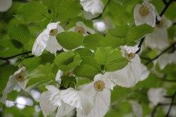 Blüten-021