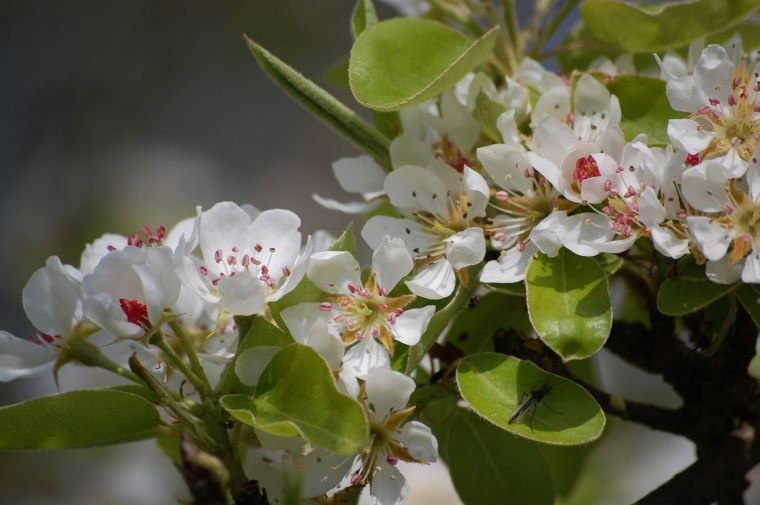 Blüten-029