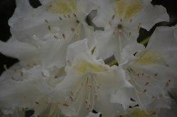Blüten-040