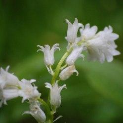 Blüten-049