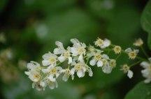 Blüten-058