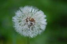 Blüten-069