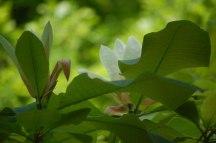 Blüten-
