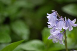 Blüten-026