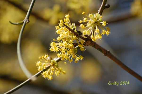 Frühling-259