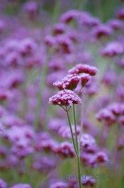 Sommerblüten-066