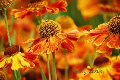 Sommerblüten-076