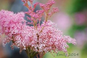 Sommerblüten-091