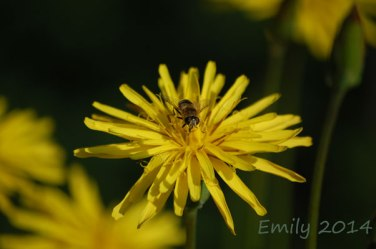 Blüten-006