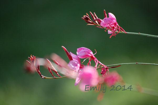 Blüten35
