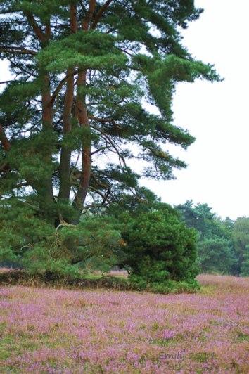 Heide-022