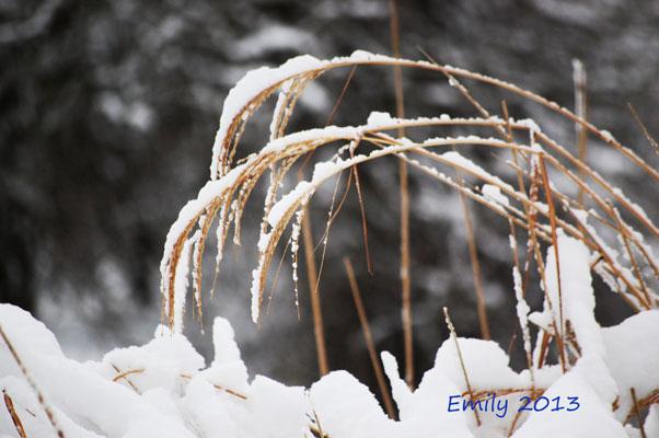 Winter_2010-046