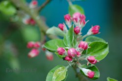 Blüten-036