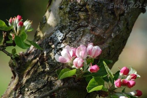 Blüten-044
