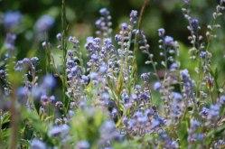 Blüten-im-Mai-025