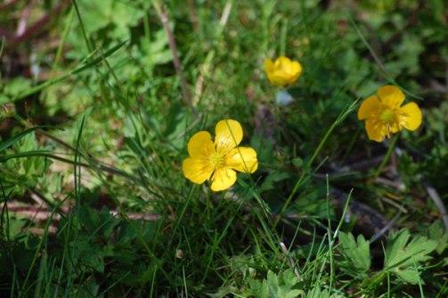 Blüten-im-Mai-028