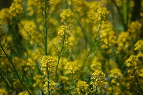 Blüten-im-Mai-032