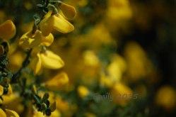 Blüten-im-Mai-035