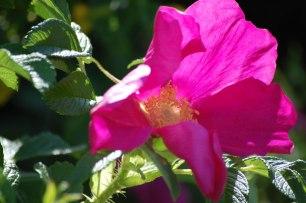 Blüten-im-Mai-036