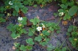 Blüten-im-Mai-045