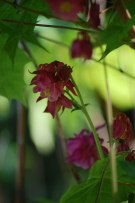 Blüten-im-Mai-047