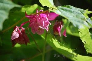 Blüten-im-Mai-048
