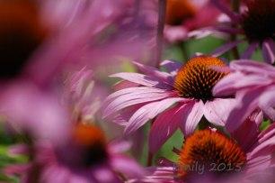 Natur-2015-048